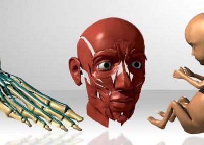 3D medical test renders