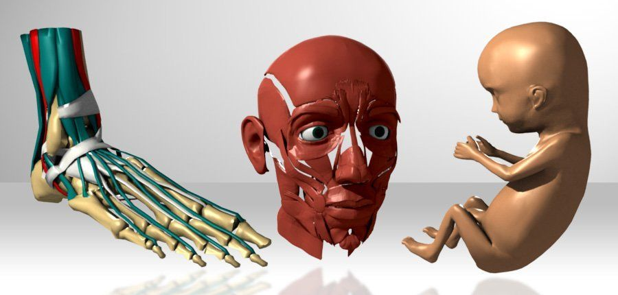 3D Medical Still Renders